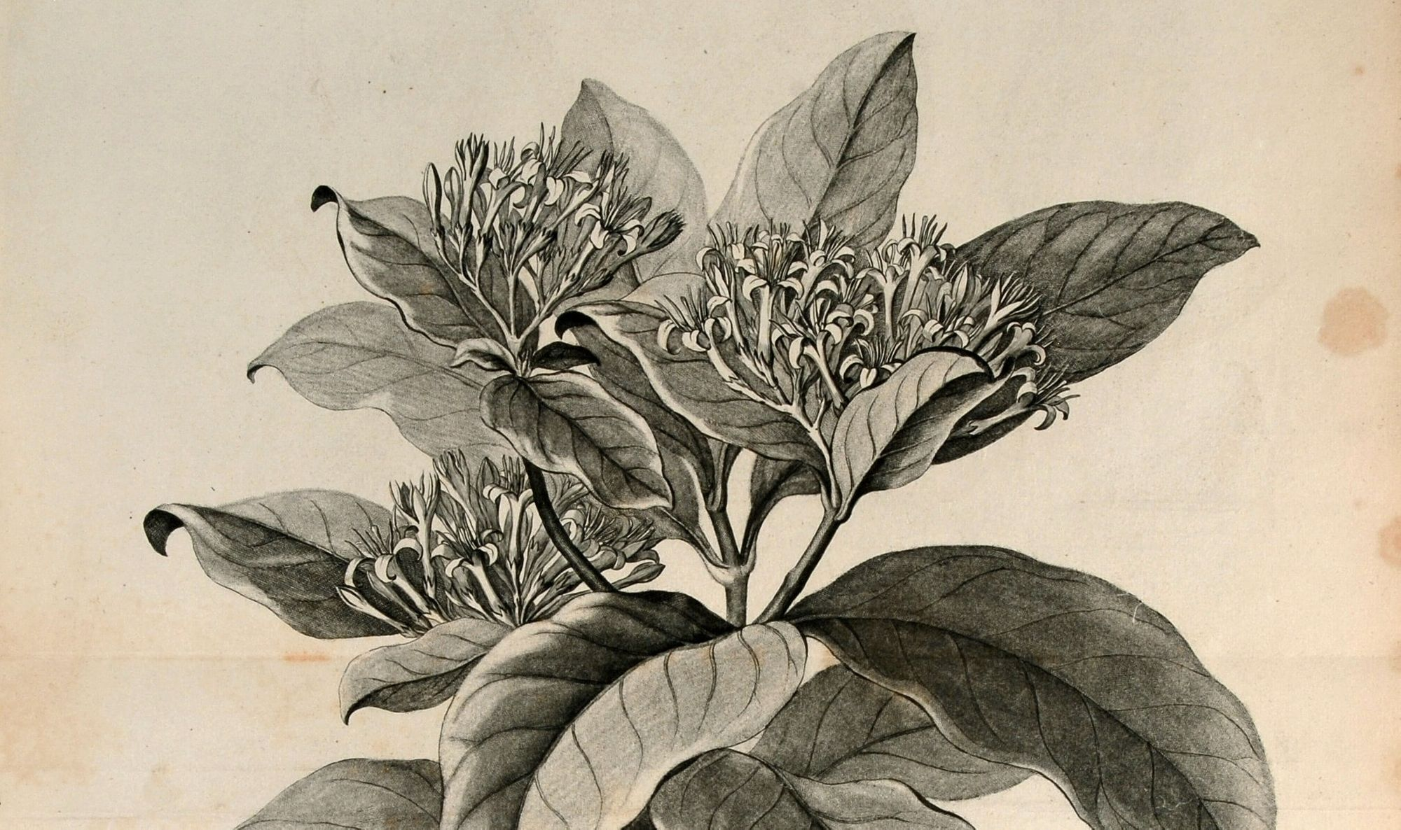 Scientific American Blog: How Have Plants Shaped Societies?